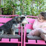Pet benefits: more than a best friend
